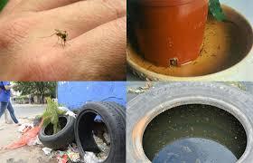 Propicios para dengue y paludismo
