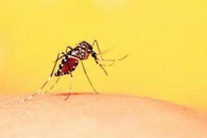 El piquete de mosco puede provocar una reacción alérgica.