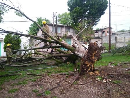 Reportan caída de árboles