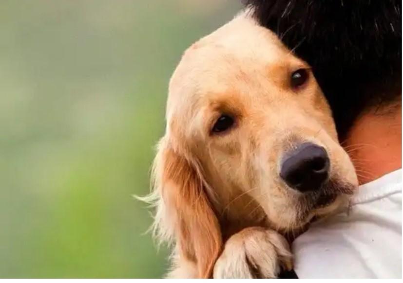 Esto hay que hacer si envenenan a tu mascota