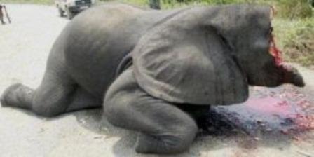 Díselo a Japón: ¡prohíban ya el tráfico de marfil!: Equipo de Avaaz