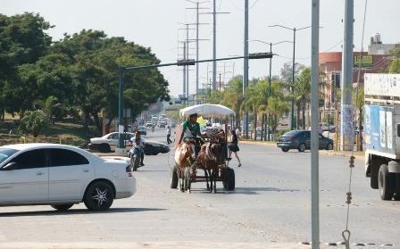 Urge terminar con el maltrato de burros, caballos y bueyes en el Estado de México